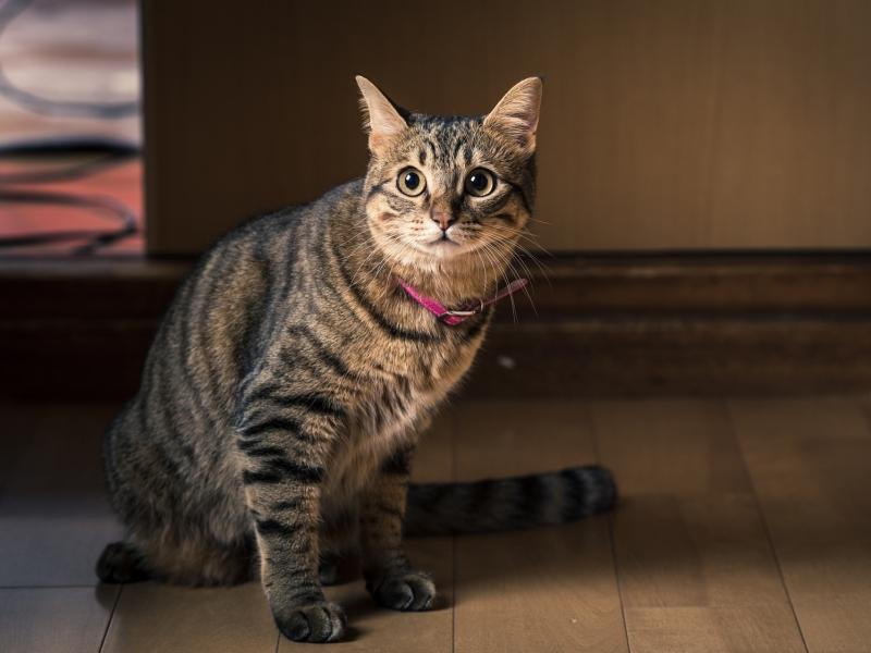 猫背さんに朗報!テレビを見ながら猫背改善ストレッチ♪